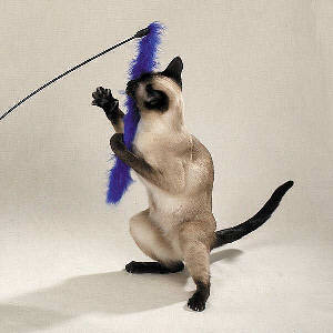 Marabou feather cat toy